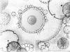 ogrody_projektowanie_11
